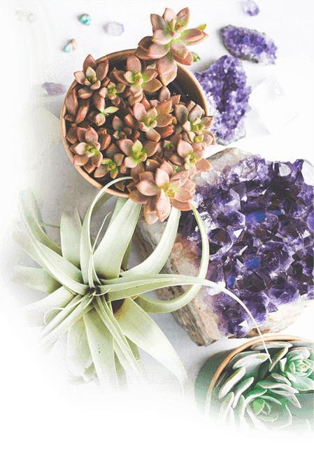 Plants and Crystal